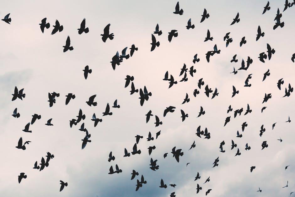 pexels-photo-crows-203088
